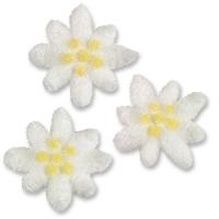 Stelle alpine bianco-gialle